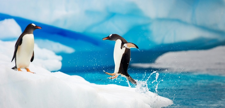 Filtre google pingouin 2