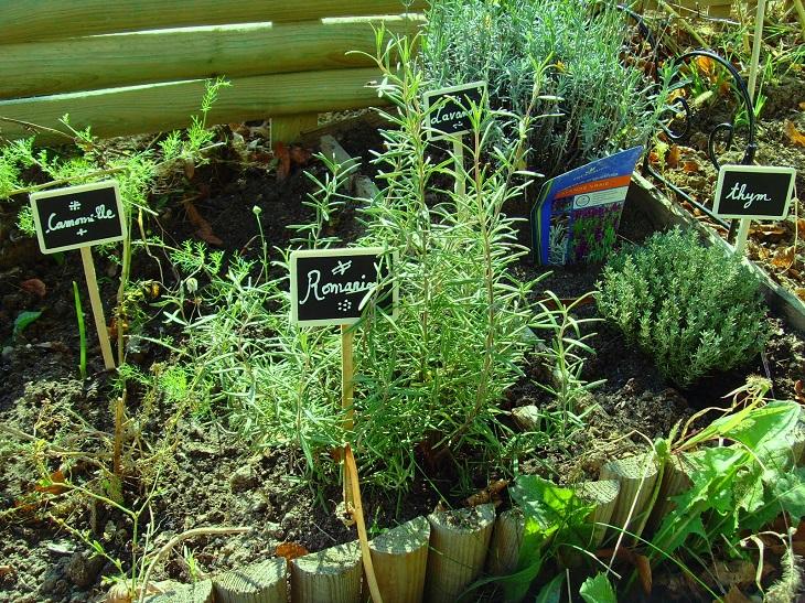 Plantes Aromatiques Un Jardin Facile Pour Une Cuisine Plein De Gouts