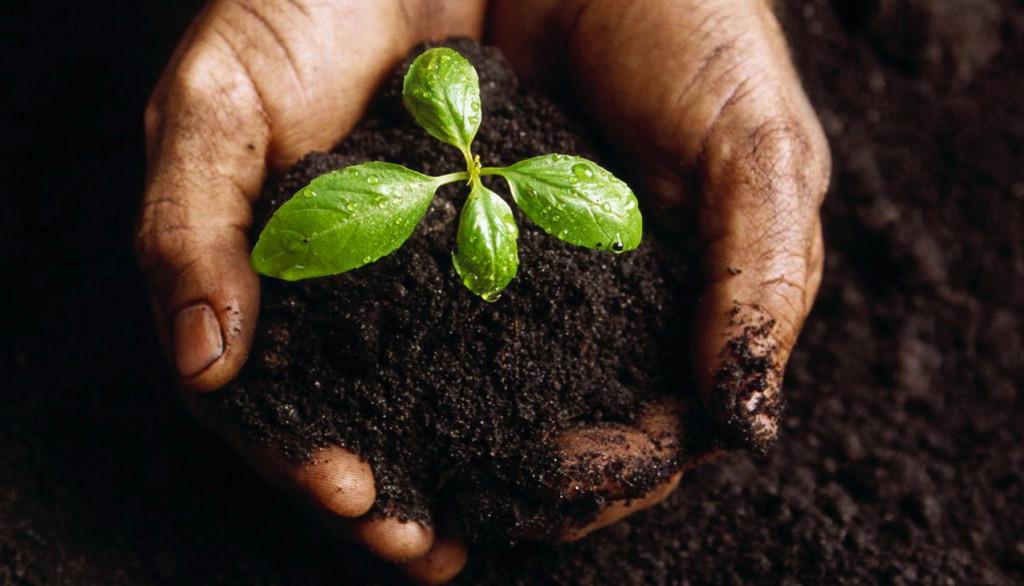 Comment expliquer le succès de la nourriture bio 2