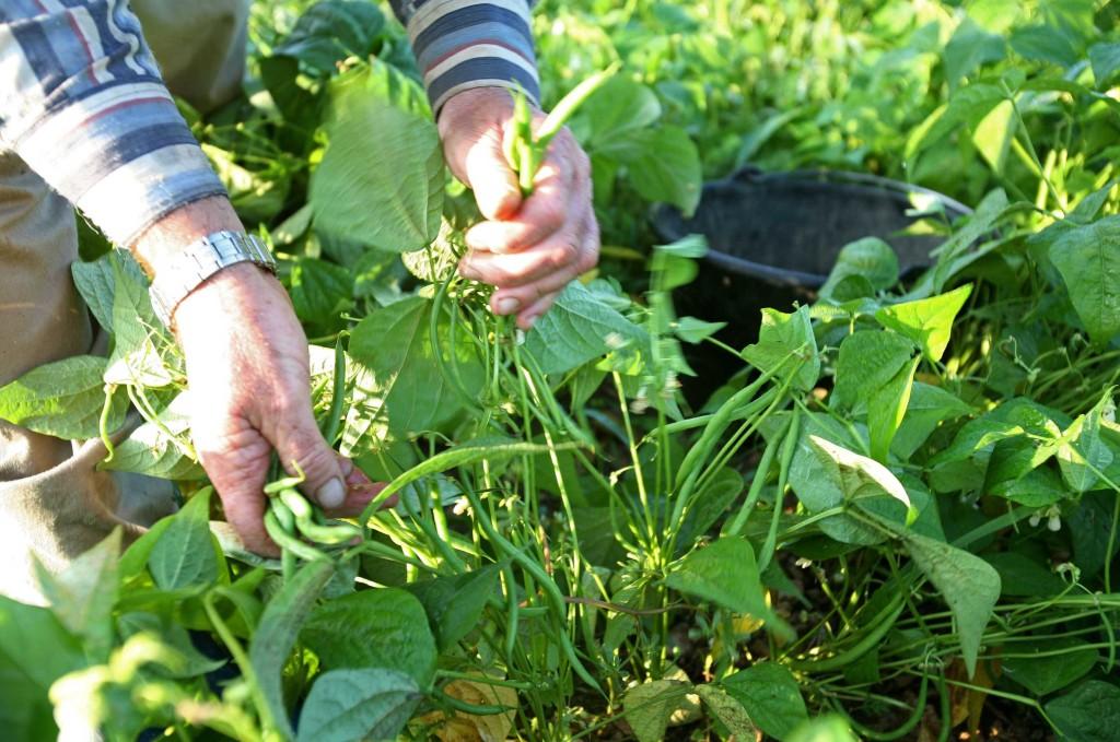 """BOUCHES-DU-RHONE : """"Ma Terre"""", SARL specialisee dans la preparation et la livraison de paniers bio"""
