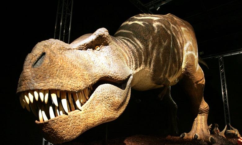 Visite guidée du musée d'histoire naturelle de Paris 3