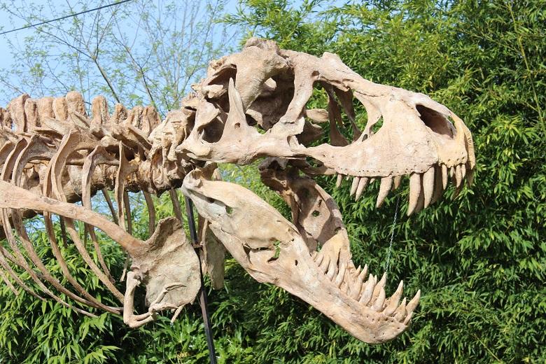 Expos dinosaures pour faire revivre le jurassique 3