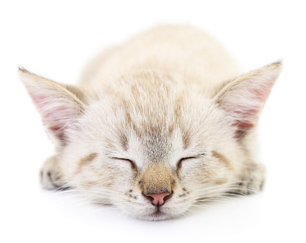 chat-qui-dort-assurance-animaux