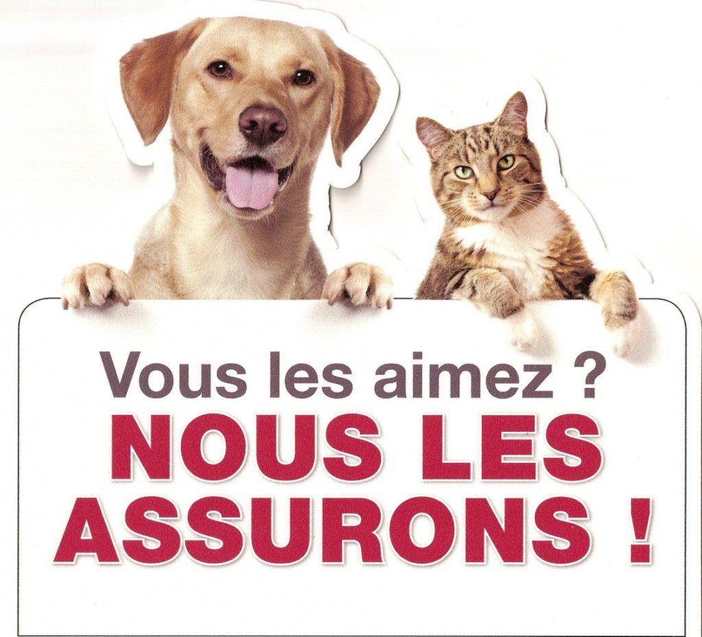 chien-et-chat-assurance-animaux